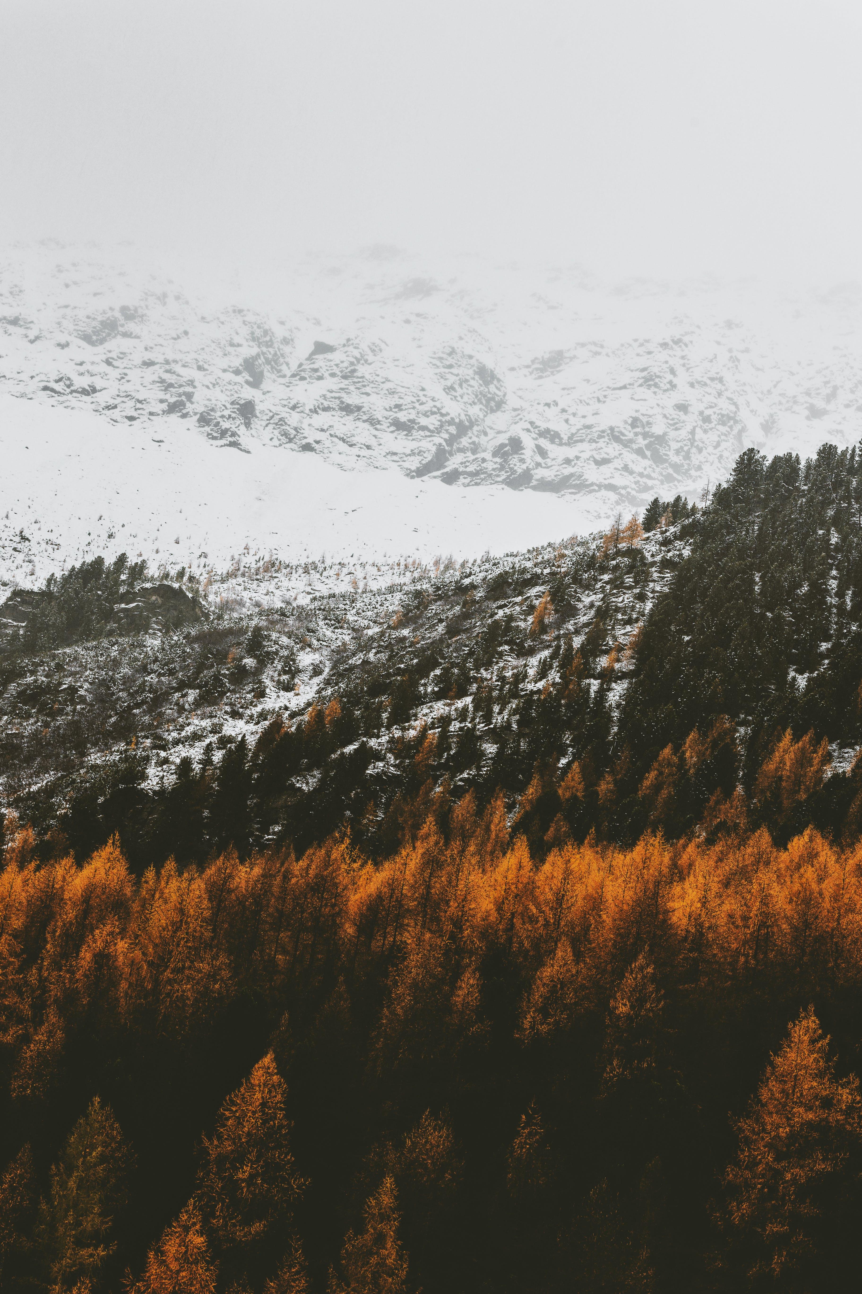 Brown Trees On Mountains