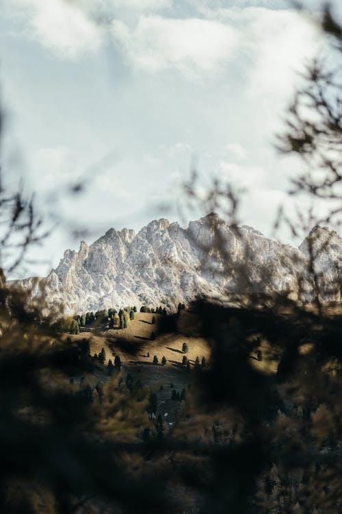 Fotobanka sbezplatnými fotkami na tému denné svetlo, hora, krajina, les