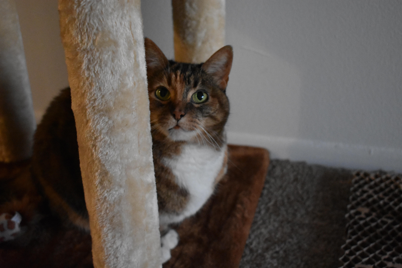 Free stock photo of cat, cat face, cat toy
