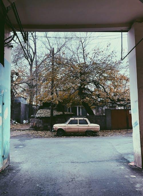 Parked Brown Sedan Near Tree