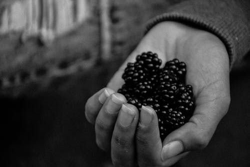 Free stock photo of black and white, blueberries, hand, nails