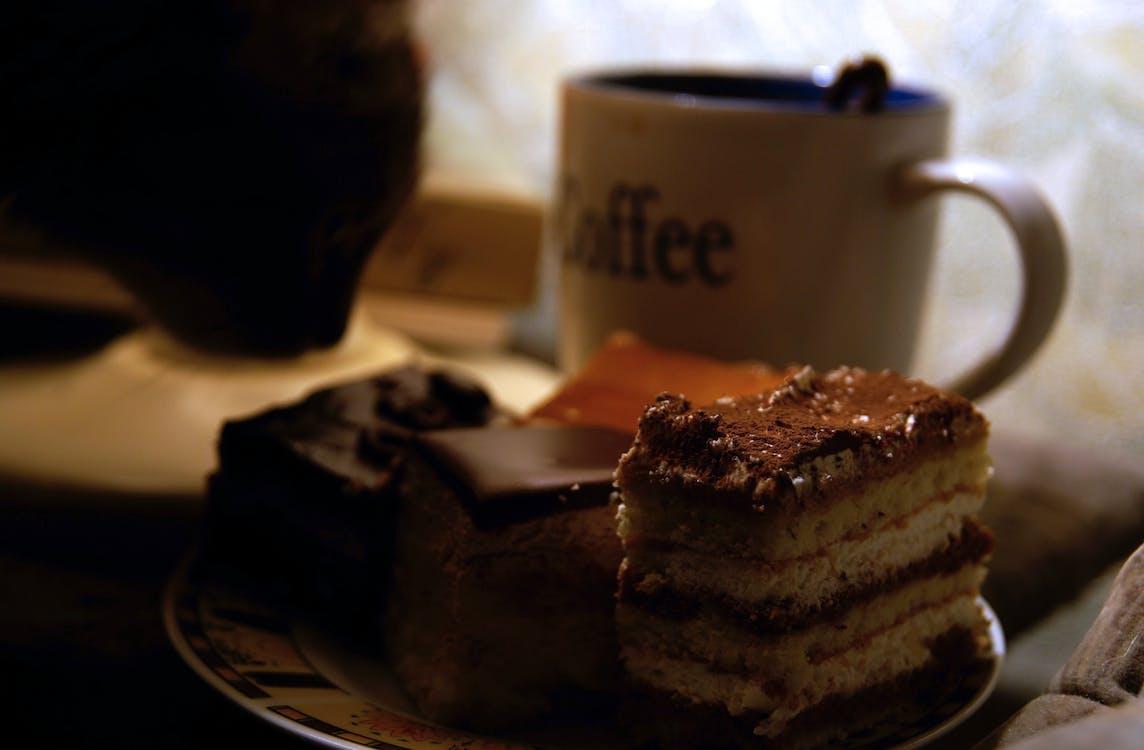 Free stock photo of cake, cat, chocolate