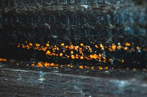 Foto profissional grátis de compacto, contradição, inverno, laranja