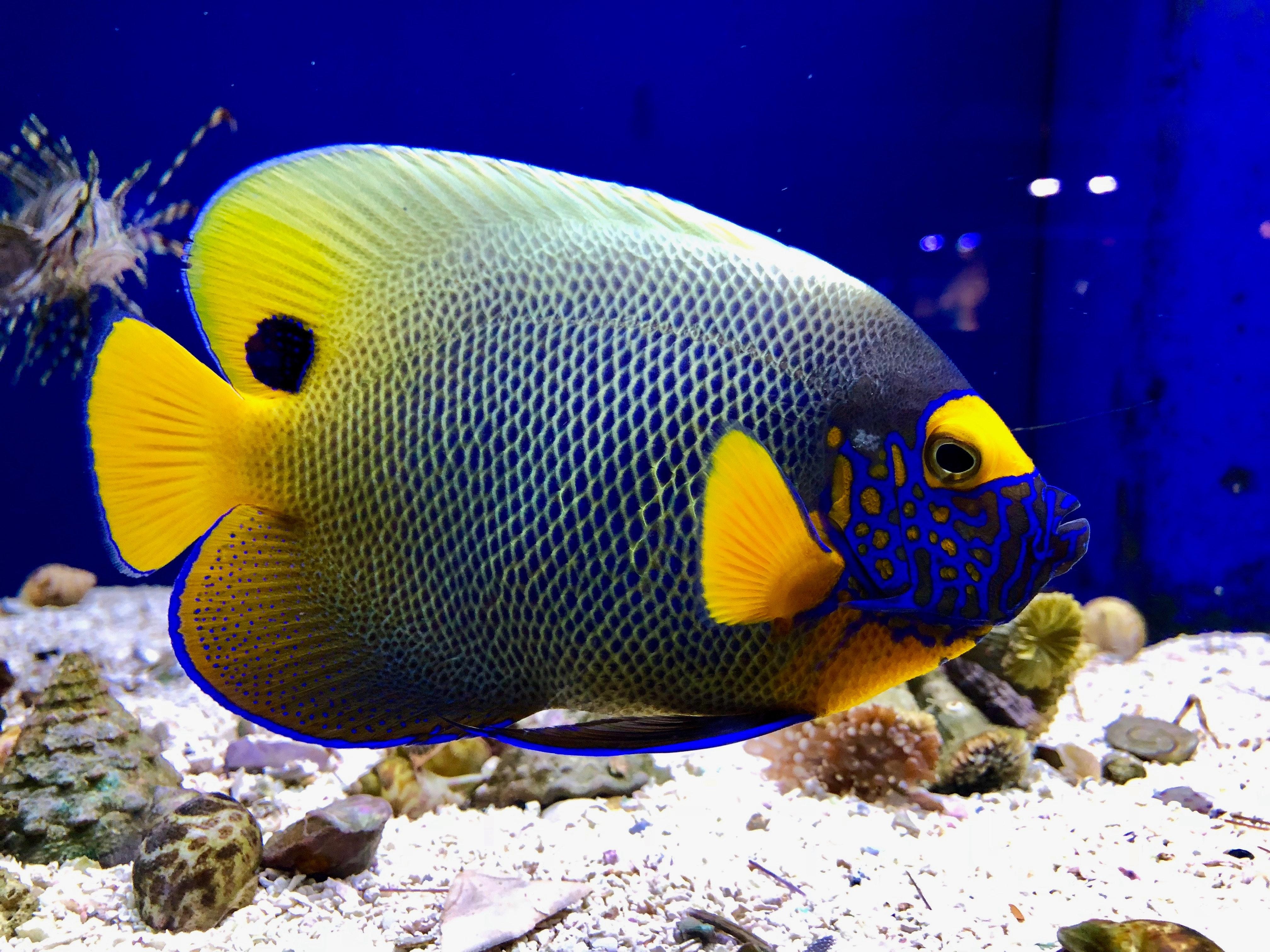 Download 40 Gambar Ikan Laut HD Terpopuler