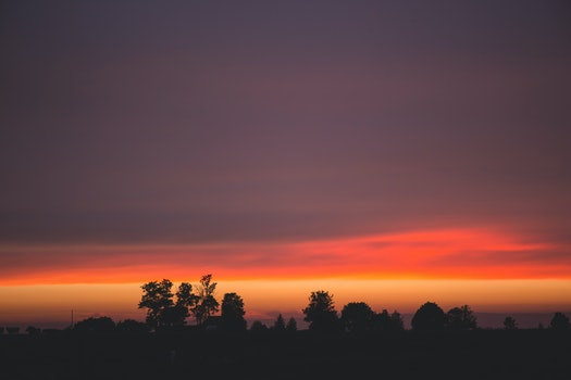 Silhouettes of Trees During Dawn