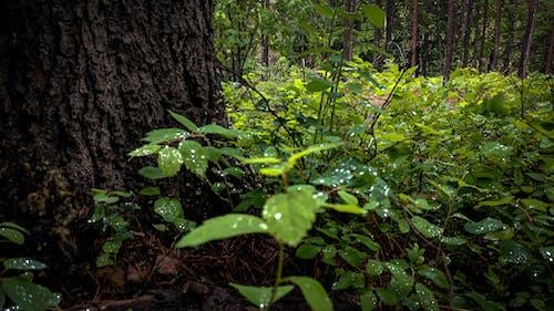森林, 植物, 植生, 露の無料の写真素材