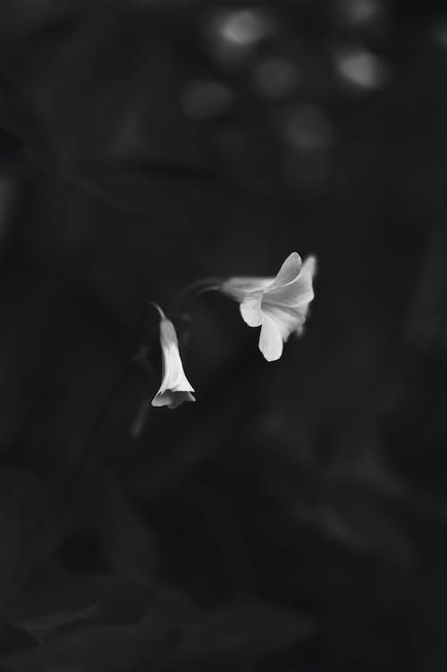 漆黑, 白色的花, 花 的 免費圖庫相片
