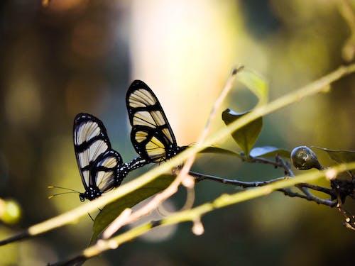 doğa, kelebek, sarı, Yaprak içeren Ücretsiz stok fotoğraf