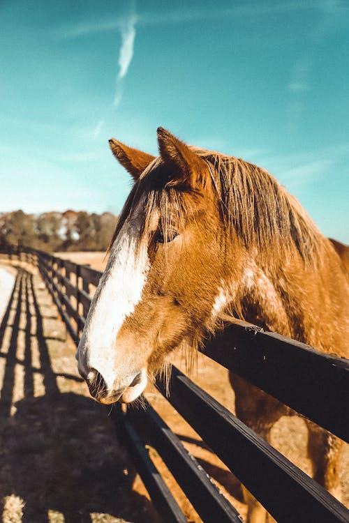 ファーム, フィールドの馬, フェンス, 動物の無料の写真素材