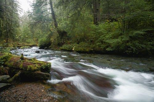Ilmainen kuvapankkikuva tunnisteilla hirsi, kivet, metsä, pitkä valotusaika
