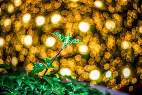 Fotobanka sbezplatnými fotkami na tému bokeh fotografie, rozostrené pozadie skruhovým pohybom, Vianoce, vianočné osvetlenie