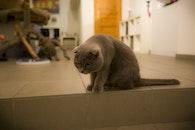 Grey Cat on White Floor Tile