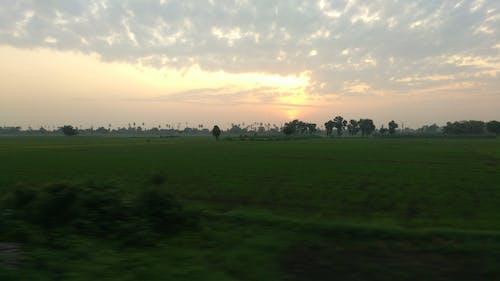 Free stock photo of Andhra Pradesh, dark green, golden sun, india