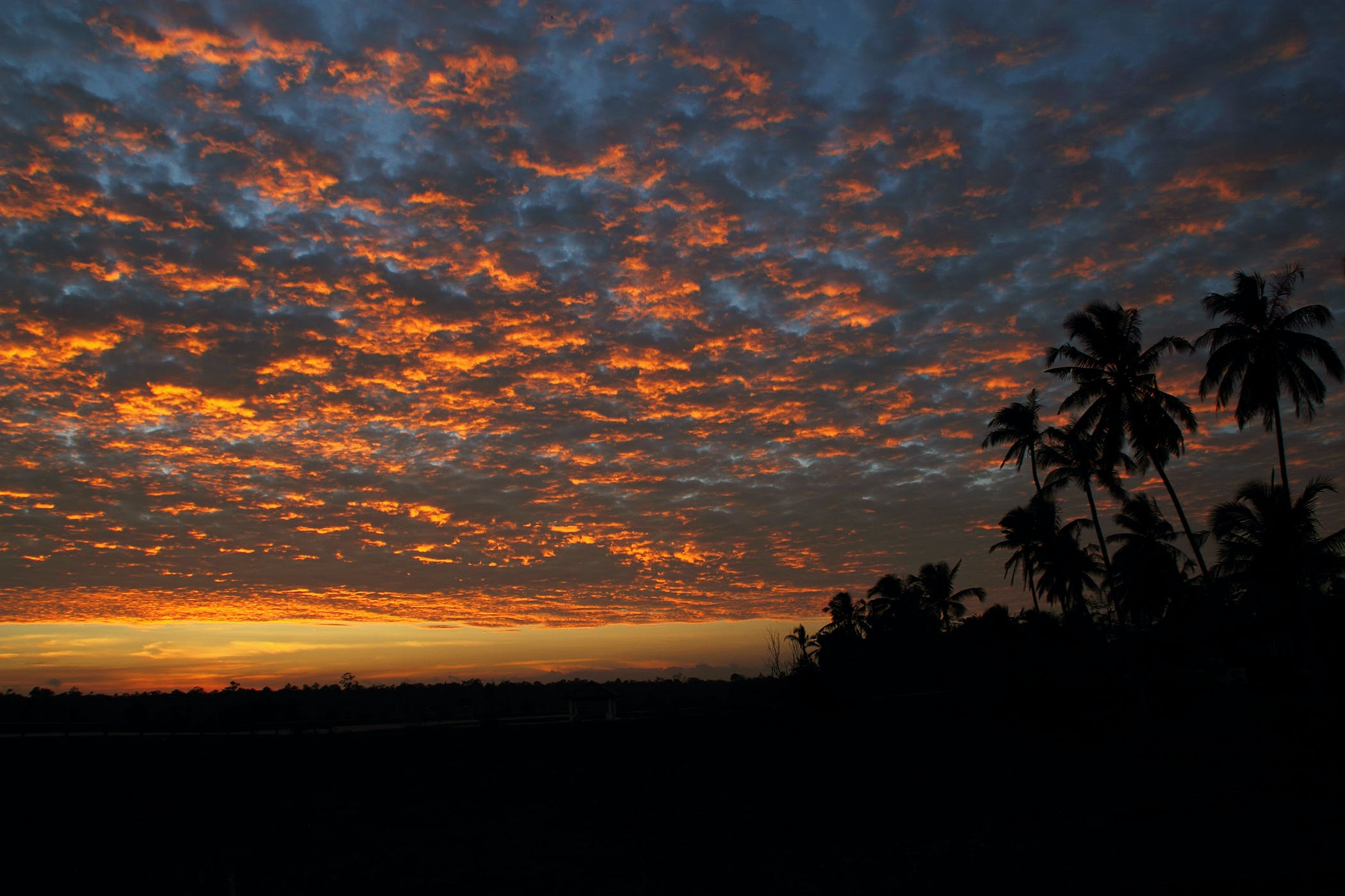Coconut Trees Under Light and Dark Sky during Sunset