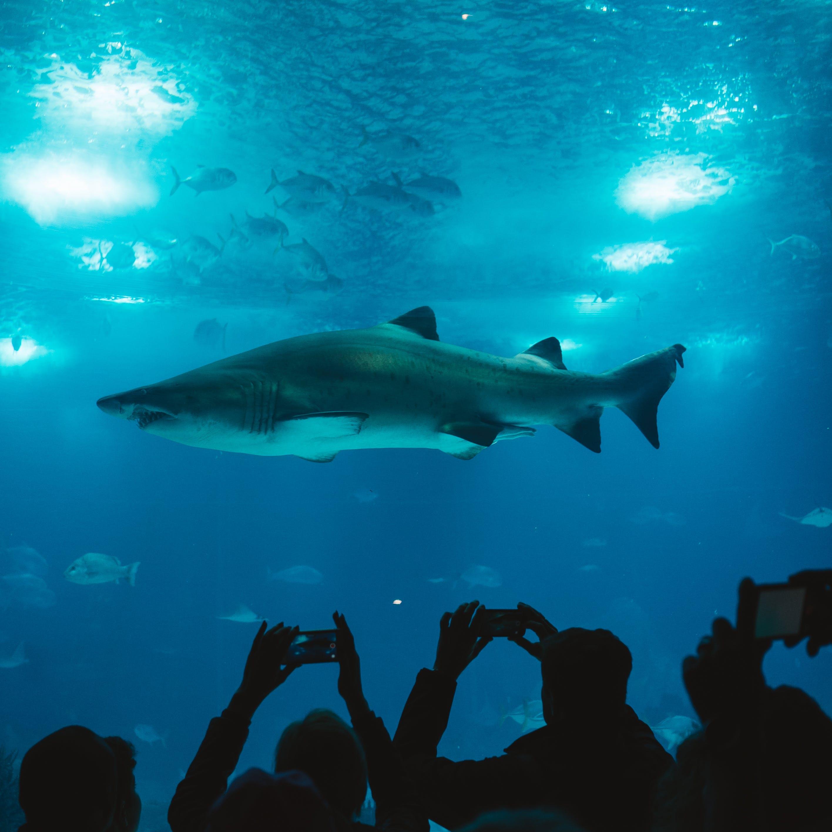 акваріум, акула, вода