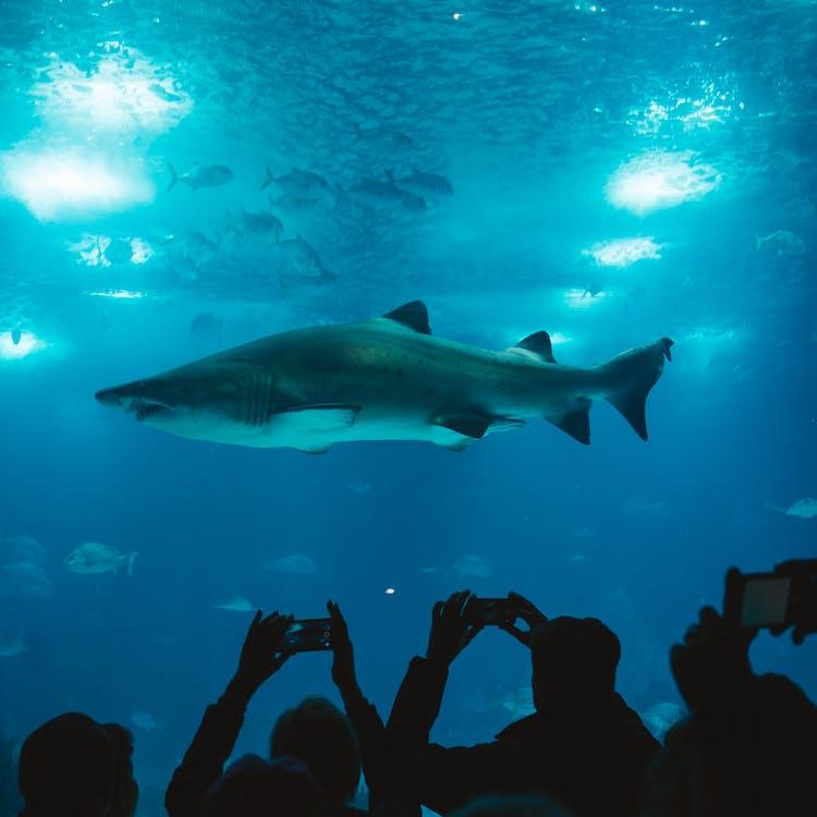 akvaario, eläin, hai