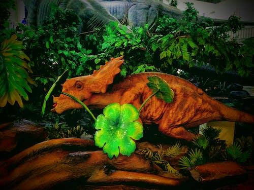 Free stock photo of beautiful flowers, dinosaurs, india