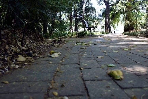 Immagine gratuita di #pathway #emmerentia #johannesburg