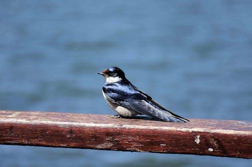 Immagine gratuita di #bird #blue #emmerentia #johannesburg