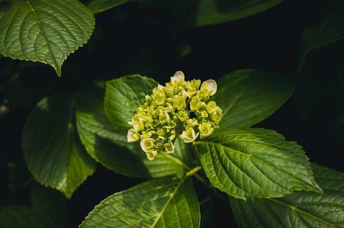 Foto d'estoc gratuïta de fulles verdes, plantes verdes, primer pla, verd