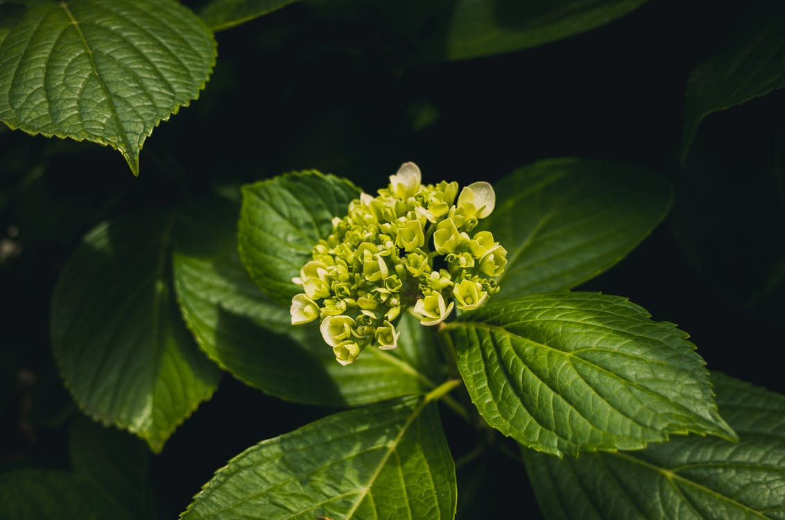 fulles verdes, plantes verdes, primer pla