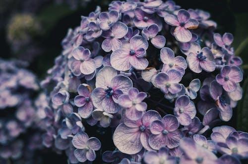 Gratis lagerfoto af 4k-baggrund, blomst tapet, blomster, blomstrende