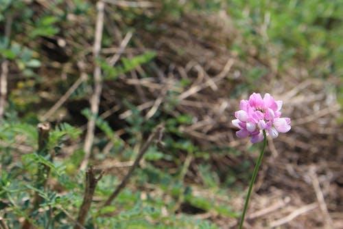 Imagine de stoc gratuită din bețe, flori frumoase, frumos, frumusețe