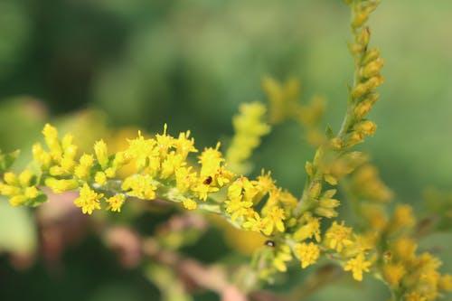 Foto profissional grátis de amarelo, atraente, besouro, besouros