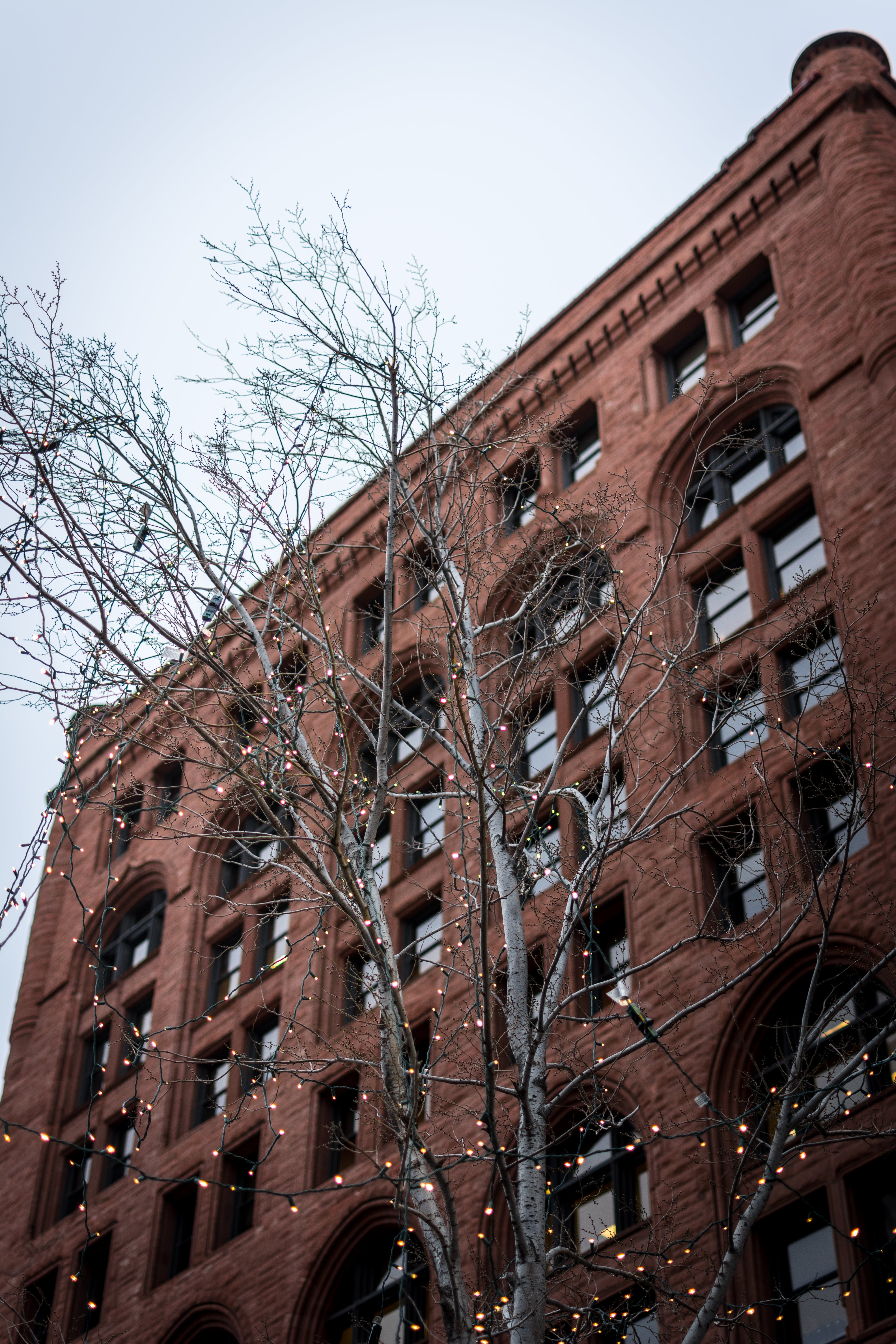Free stock photo of branches, brick, building, christmas