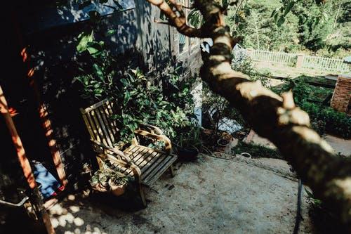 Brown Wooden Armchair Beside Green-leafed Plants