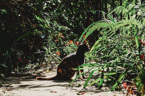光, 公園, 動物, 叢林 的 免费素材照片