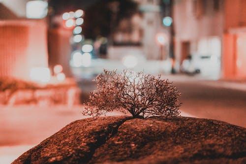 Ilmainen kuvapankkikuva tunnisteilla japani, yksinäinen