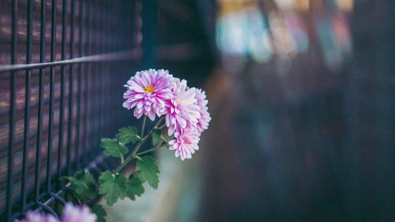 Ilmainen kuvapankkikuva tunnisteilla kukka