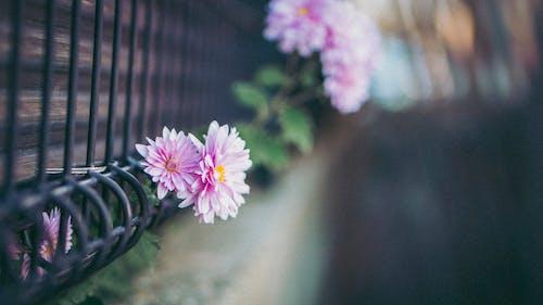 Foto stok gratis bunga