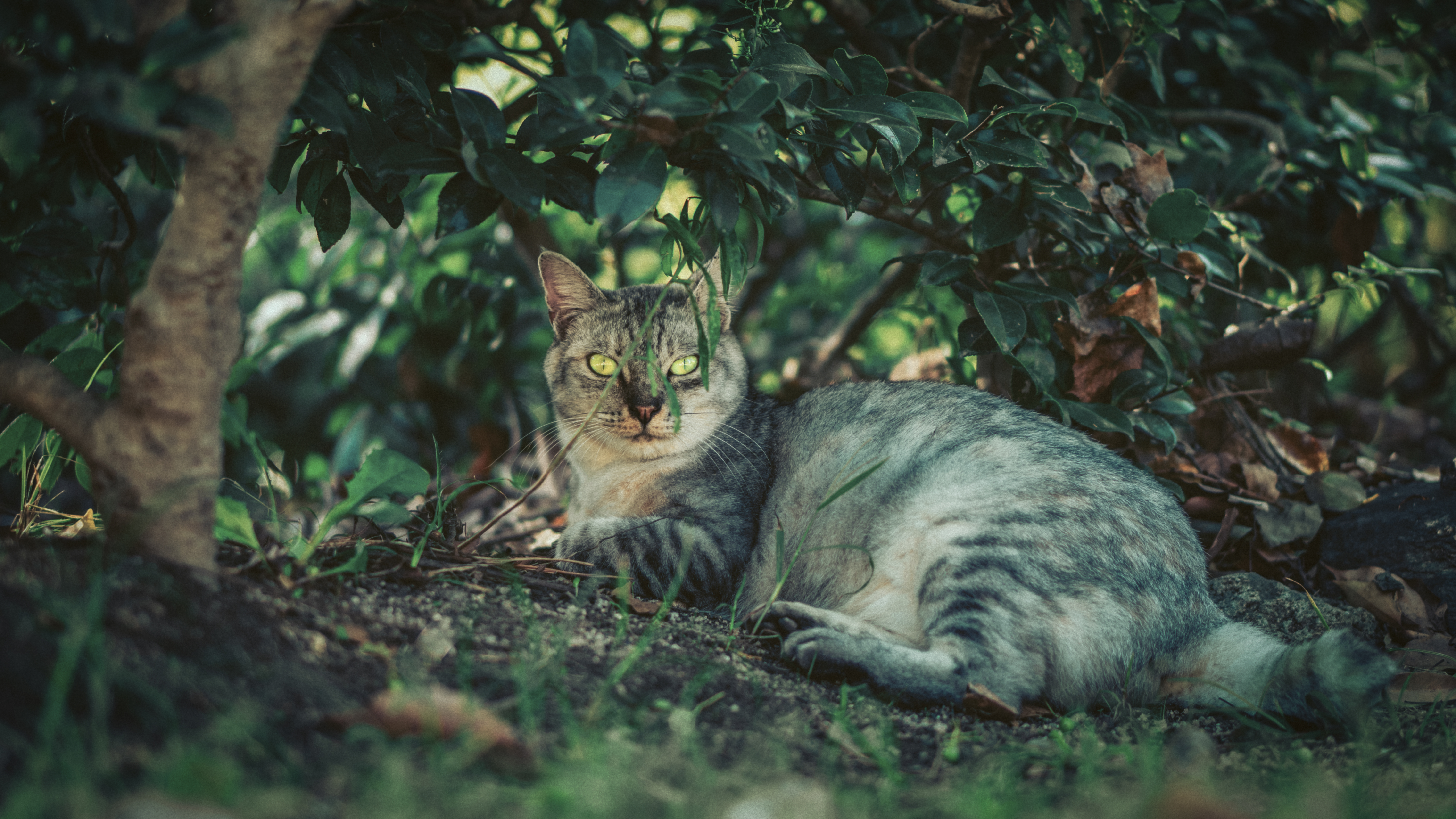 Close-Up Photo of Cat Lying On Dirt