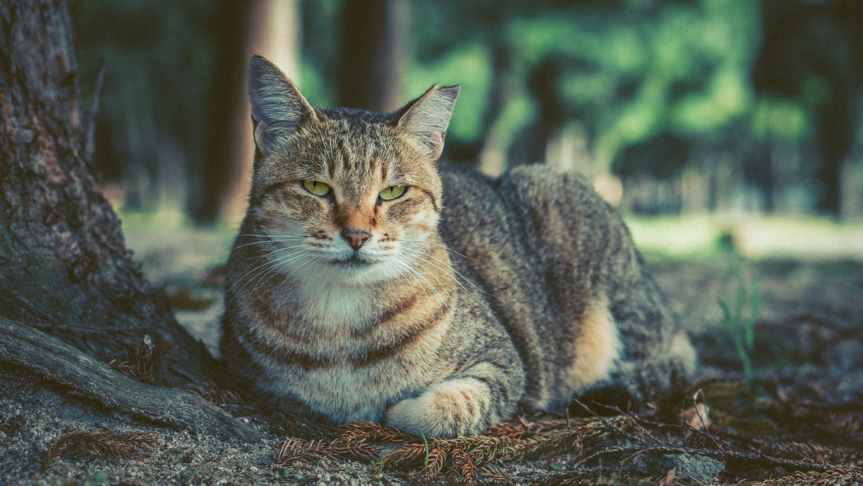 Tabby Cat Lying Near Tree