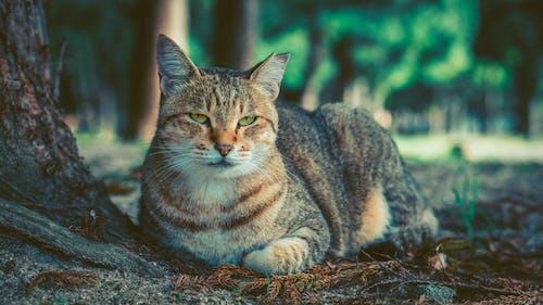 Photos gratuites de animal de compagnie, animal domestique, chat, chat domestique