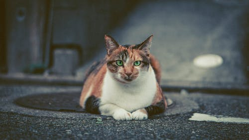 Photo of Cat Lying on Pavement