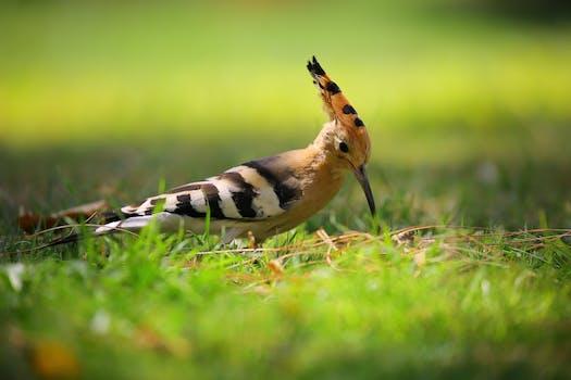 free stock photo of animal avian beak