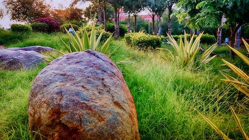 在花園裡的岩石, 漂亮, 綠草地, 花園 的 免費圖庫相片