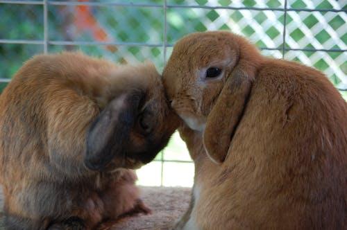 Free stock photo of love, pet, rabbit