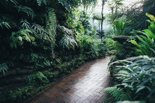 光, 公園, 原本, 叢林 的 免费素材照片