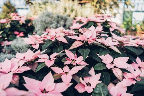 Foto stok gratis berkembang, bunga-bunga, flora, kebun