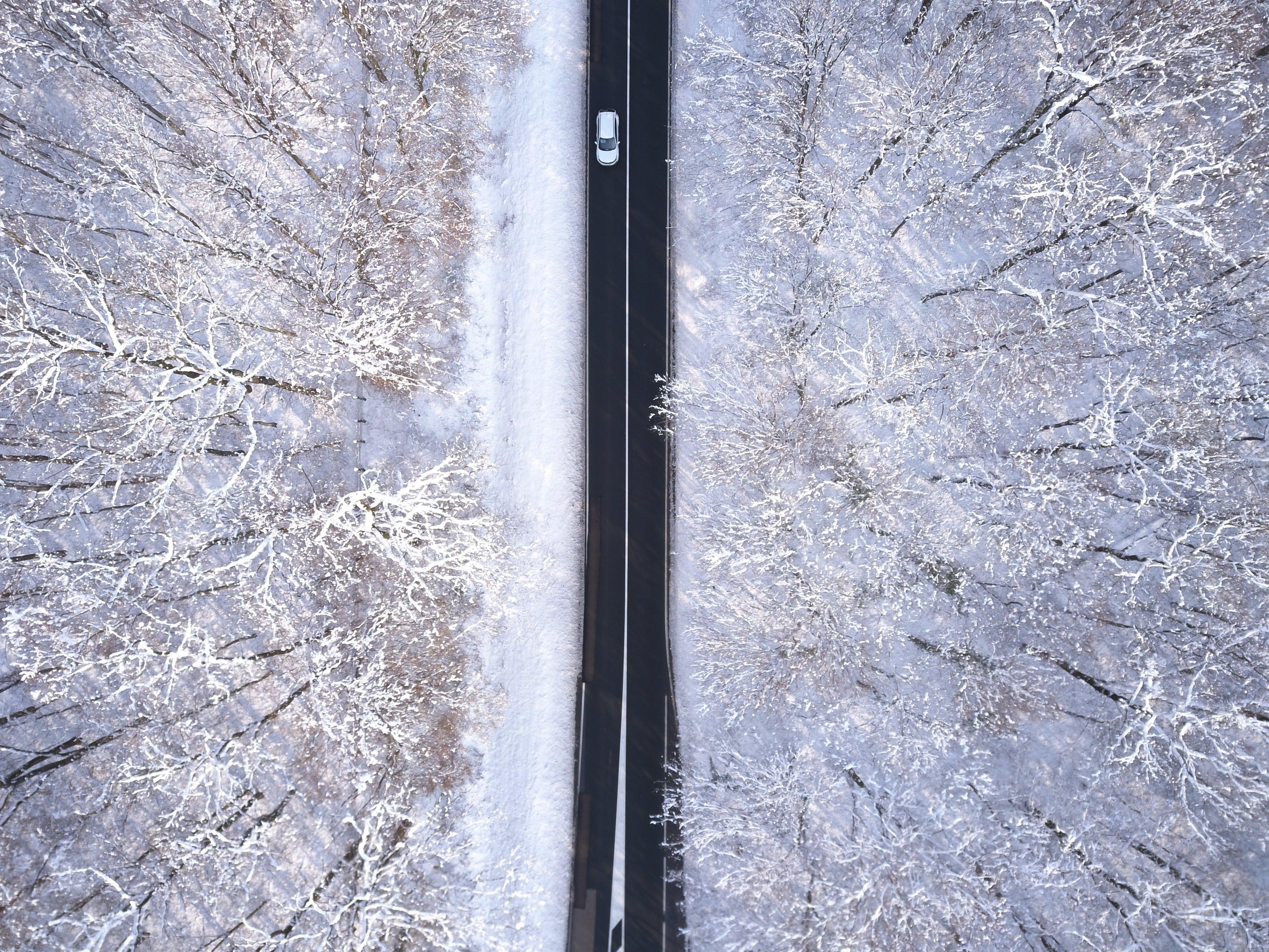 Foto d'estoc gratuïta de arbres, autopista, bosc, carretera