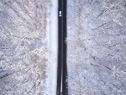 Top View Photo of Roadway Surrounded By Trees