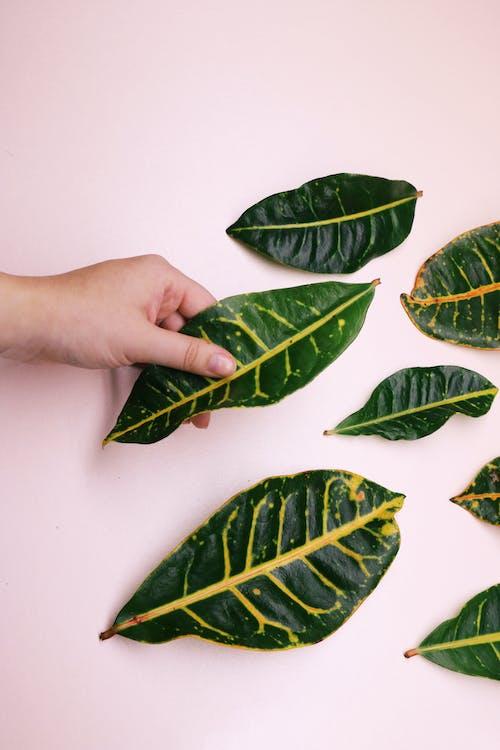 Бесплатное стоковое фото с зеленый, листья, окружающая среда, природный