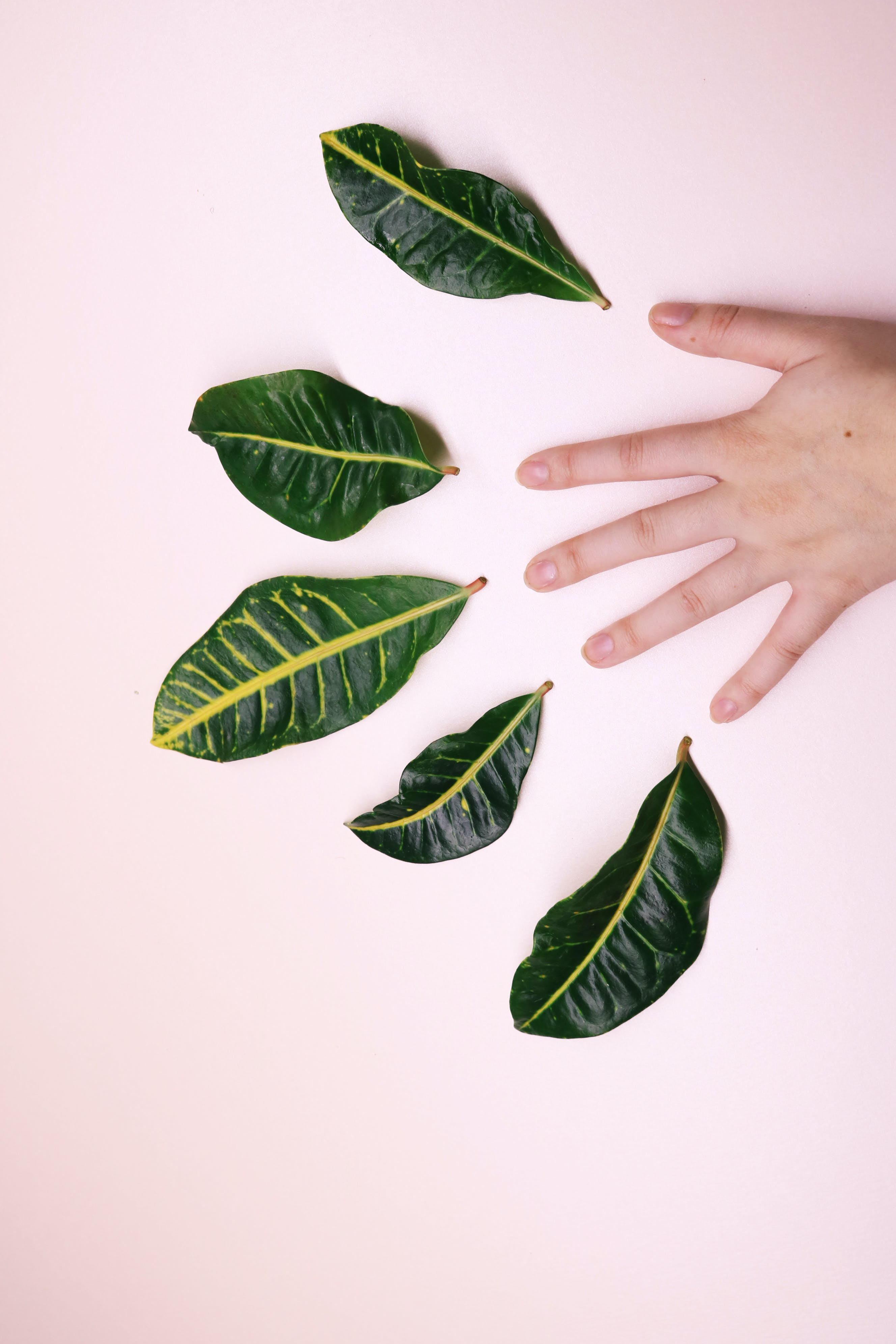 Human Hand and Five Leaves on White Surface