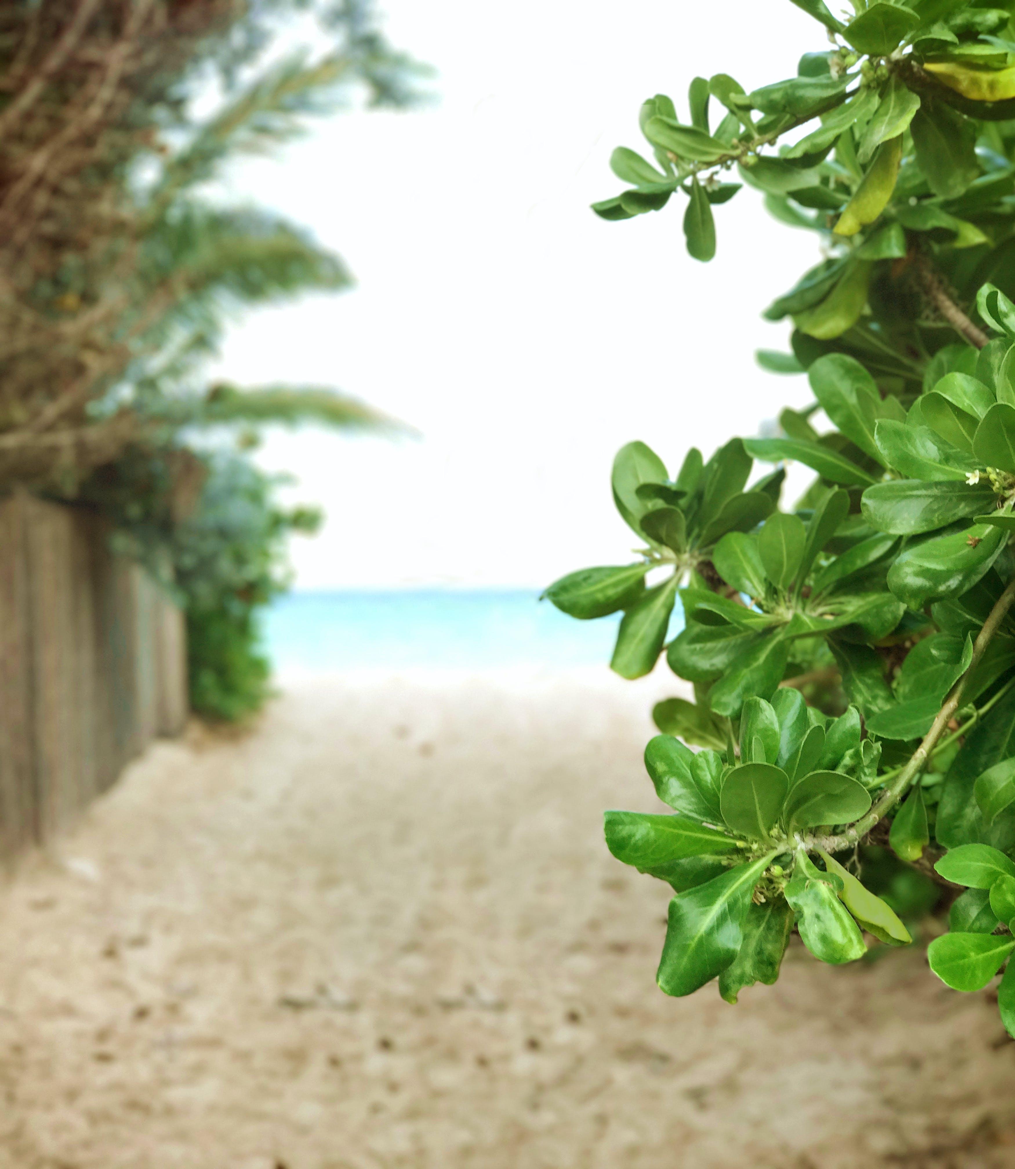 Free stock photo of beach, beach access, fence, lanikai