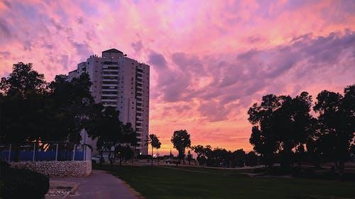 Immagine gratuita di cielo nuvoloso, parco, viola