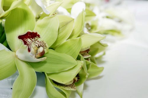 Free stock photo of bouquet, bridal bouquet, flower, green